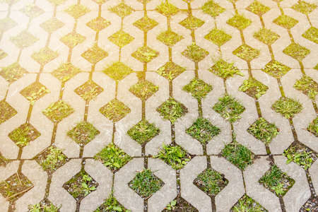 Detail view of grass grid stones in parking lot outdoors in garden. 免版税图像