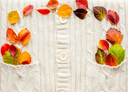 Indoors flat lay view of white soft knitted textile background with colorful autumn leaves peeking out of pocket, lot of copy space.