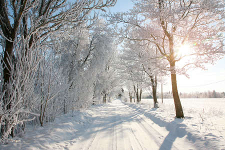Gorgeous winter snowy tree-lined path in the countryside, sun shining through trees. Trees covered with frost.
