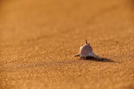 starfish shell on sunrise sunset beach