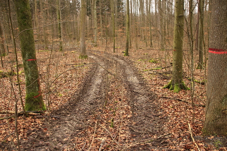 lanes on a forest floor that were created when driving after a heavy downpour
