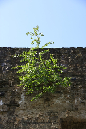 City wall in the old town of Andernach am Rhein