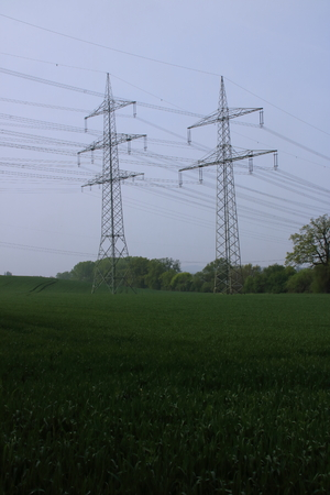 Electricity poles in a meadow near Andernach in Rhineland-Palatinate
