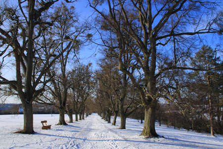 View through the avenue of linden trees on the Friedenshöhe near Flacht in winter