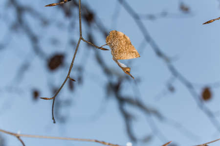 zweig: Branch with snow Stock Photo