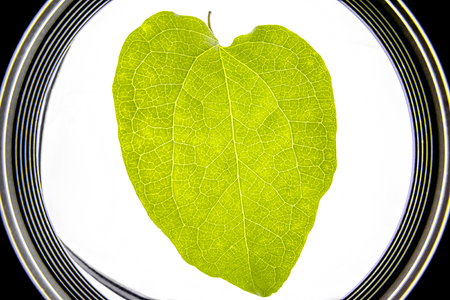 Microscopic fisheye view of a green leaf - Close up view with leaf texture Stock Photo