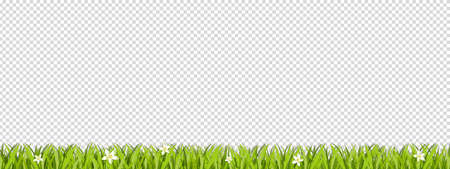 Green Lawn Area Isolated On Transparent Background - Vector Illustration With Copy Space