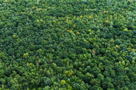 Aerial summer view from above a protected forest in Quebec, Canada Imagens