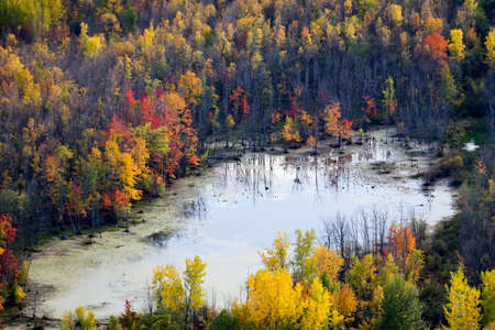 Scenic Aerial view of a wetland surrounded by the colorful autmn forest on a sunny day. Canada. Imagens