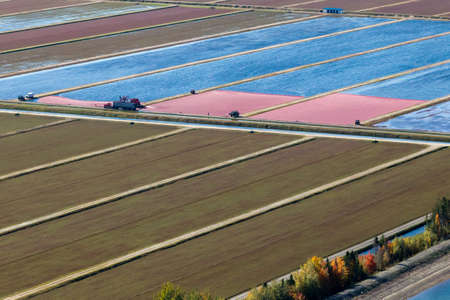 Fall harvest season, aerial view of workers and equipment at a cranberry bog in rural Quebec, Canada.