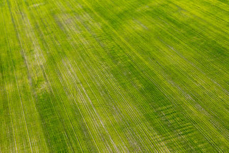 Aerial view of bright green farmed field in rural Quebec, Canada. Imagens