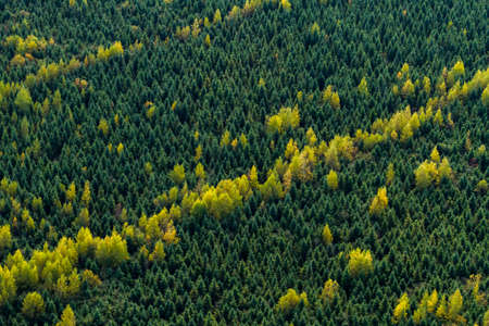 Aerial view of a boreal forest in Quebec. Canada at fall.