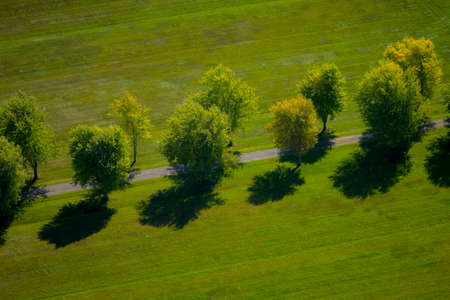Aerial view of a gravel path lined with mature trees on a sunny summer day.