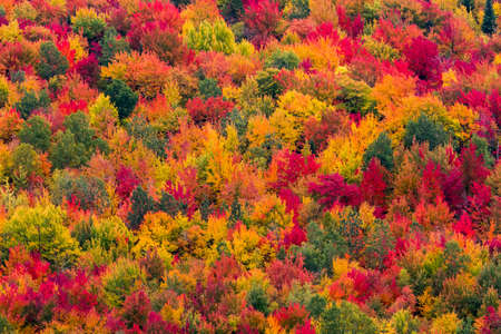 Colorful aerial view of a north american forest at fall.