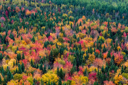 arial view: Aerial view a colorful North American forest at fall.