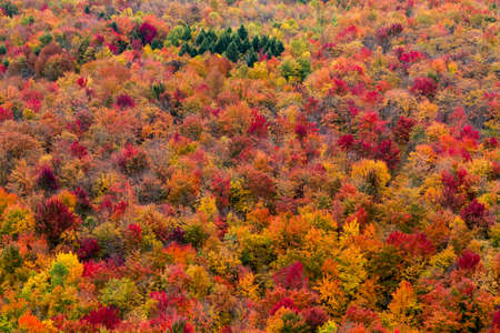 Aerial view a colorful North American forest at fall.
