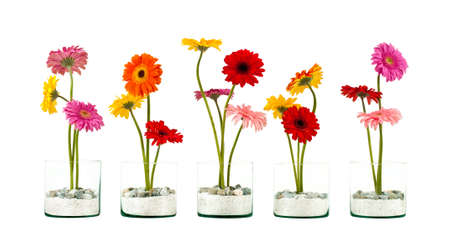 Five Gerbera flowers in a crystal flower pot in row isolated photo