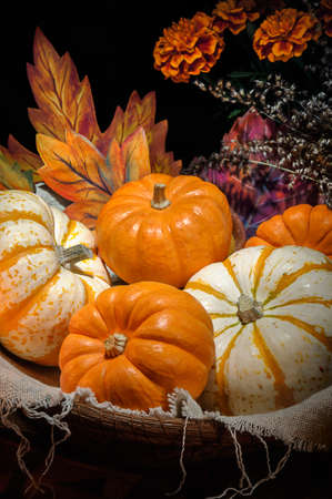 Happy Halloween - Pumpkins basket still life photo