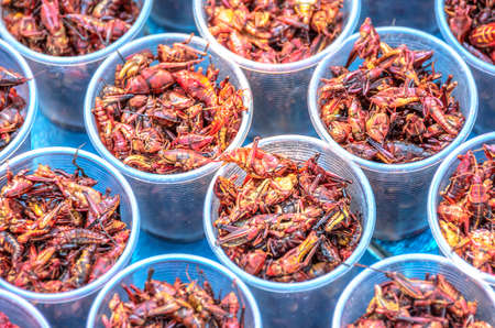 Chapulines, grasshoppers snack traditional Mexican cuisine from Oaxaca 스톡 콘텐츠