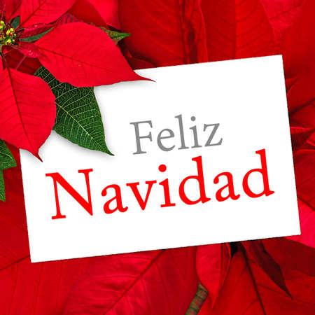 feliz navidad: Christmas greeting card with text Feliz Navidad, poinsettia decoration Stock Photo