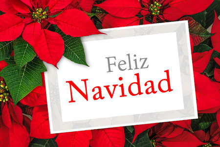 Christmas greeting card with text Feliz Navidad, poinsettia decoration Stok Fotoğraf