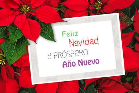 navidad: Christmas greeting card with text Feliz Navidad, poinsettia decoration Stock Photo