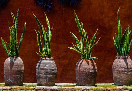 Landhuismuur met slanginstallatie in potten, abstracte achtergrond