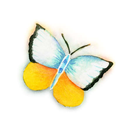 Butterfly watercolor old style hand painting isolated on white
