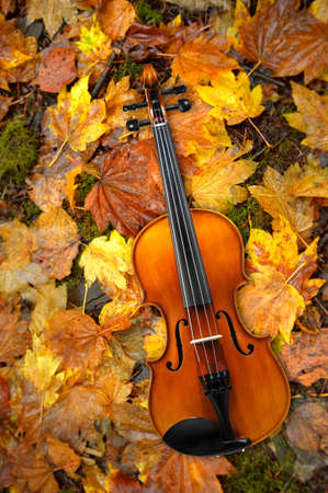 Violin Lying on Red and Orange Autumn Maple Tree Leaves Background Reklamní fotografie