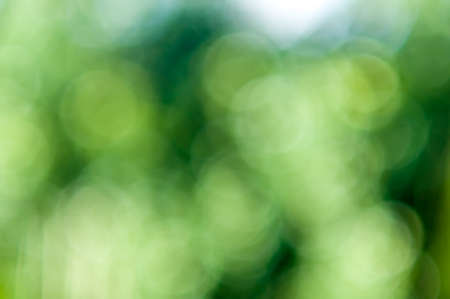 Green Bokeh, Bright defocused foliage background