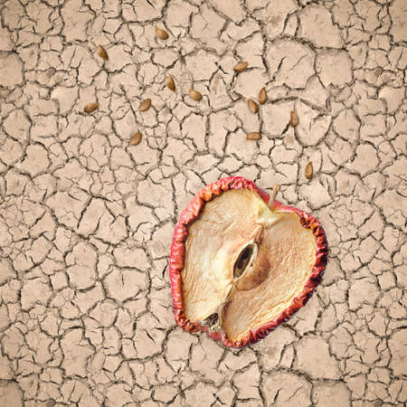 Half rotten apple and seeds on dry and cracked soil, hopeless concept with no future.