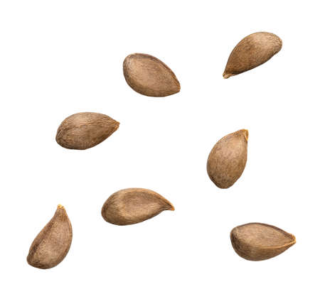 Close up of apple seeds on white background