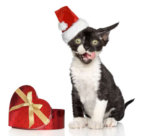 Devon Rex kitten in Santa Christmas red hat photo