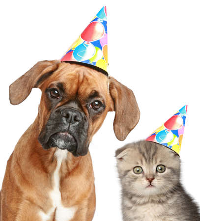 Boxer hond en Scottish fold kat in partij muts op witte achtergrond Stockfoto