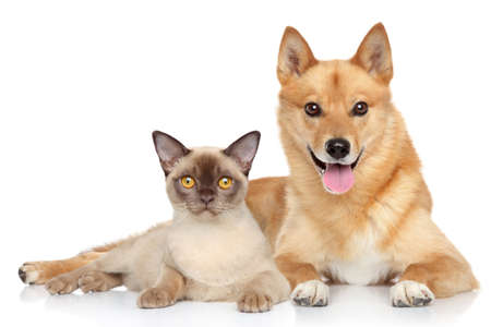 Happy dog and cat together on a white background Фото со стока