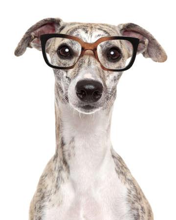 Close-up ritratto di un cane in bicchieri, su sfondo bianco