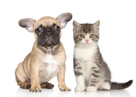puppy and kitten: Puppy and Kitten on a white background