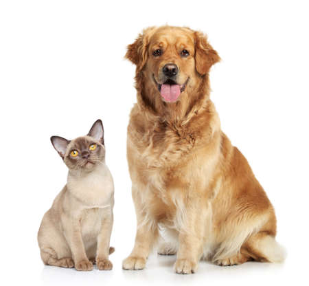 Kat en hond samen op een witte achtergrond Stockfoto