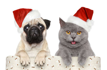 pug puppy: Cat and dog in red Christmas hat on a white background