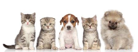 Groep van kittens en puppies poseren op een witte achtergrond