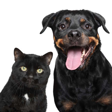 Close-up portrait of cat and dog on white background  photo