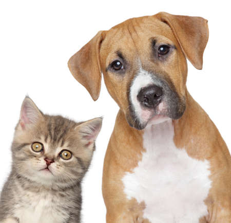 half breed: Kitten and puppy  Close up portrait on white background