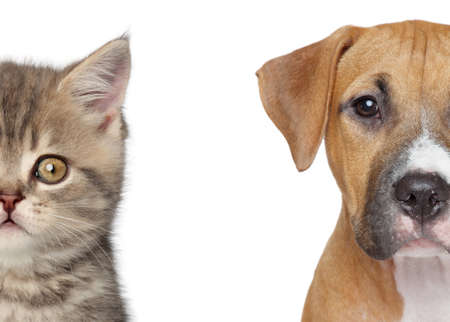 half breed: Kitten and puppy  Half of muzzle close up portrait on a white background