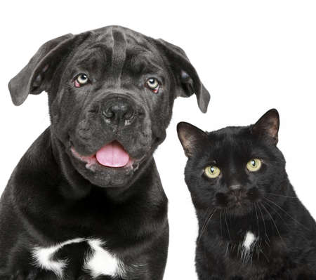 dog and cat: Dog and cat together. Close-up portrait on a white background Stock Photo