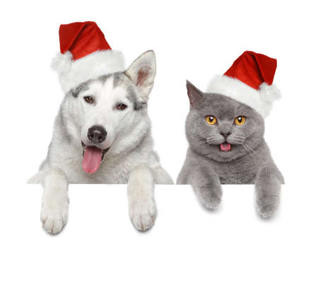 Dog and cat in Santa red hats looking at you on a white banner photo
