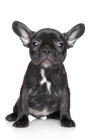 Schwarz Französisch Bulldogge Welpen sitzt auf einem weißen Hintergrund