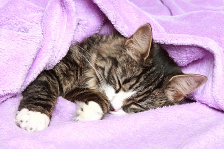 cat sleeping: kitten sleeps the covered soft blanket