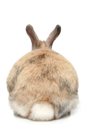 furry tail: Rabbit on a white background  rear view
