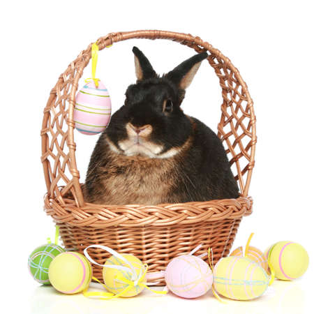 fluffy ears: Easter bunny in wattled basket with colored eggs on a white background Stock Photo