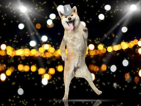 Shiba-inu dog in disco hat dance on her hind legs photo